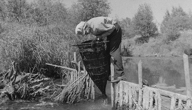 Сергей Потехин на речке проверяет плетёную рыболовную снасть